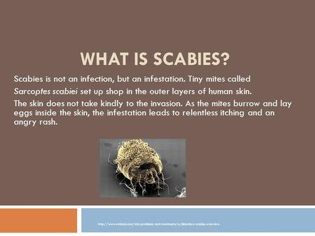 What Is Scabies? Scabies is not an infection, but an infestation. Tiny mites called Sarcoptes scabiei set up shop in the outer layers of human skin. The.