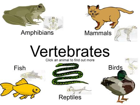 Vertebrates Mammals Amphibians Birds Fish Reptiles Click an animal to find out more.