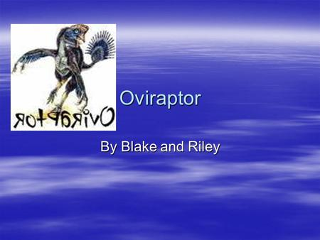 Oviraptor By Blake and Riley Supper Time! Oviraptors ate plants, animals, and eggs. They were called omnivores, which means that they ate both plants.