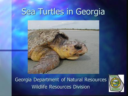 Sea Turtles in Georgia Georgia Department of Natural Resources Wildlife Resources Division.