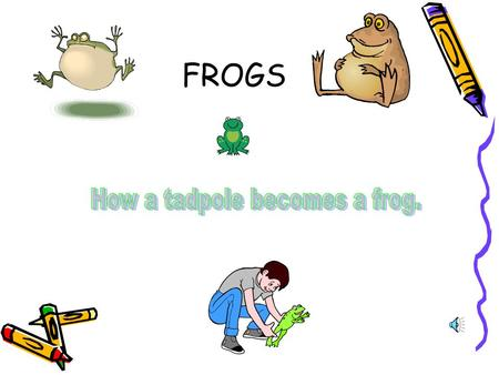FROGS 1ST STAGE OF FROGS LIFE EGGS 2 ND STAGE OF FROGS LIFE TADPOLES FINAL STAGE FROGLET TO ADULT.