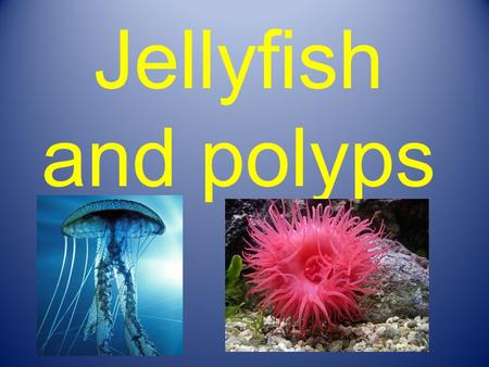 Jellyfish and polyps. Main characteristics of Jellyfish and polyps 1) They are invertebrates. 2) They dont have brain. 3) They have special body systems.