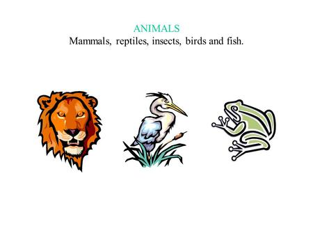 ANIMALS Mammals, reptiles, insects, birds and fish.