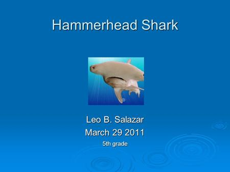 Hammerhead Shark Leo B. Salazar March 29 2011 5th grade.