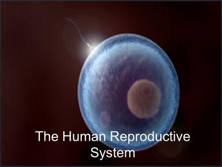 The Human Reproductive System. Reproduction Not required for the survival of an individual Reproduction is necessary to ensure the survival of a species.