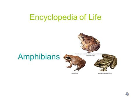 Encyclopedia of Life Amphibians. Amphibians are cold-blooded animals that metamorphose from a young, water-breathing form to an adult, air-breathing form.
