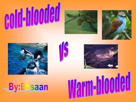 Cold-blooded Vs Warm-blooded By:Ehsaan.