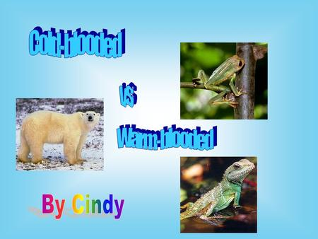 Cold-blooded vs Warm-blooded By Cindy.