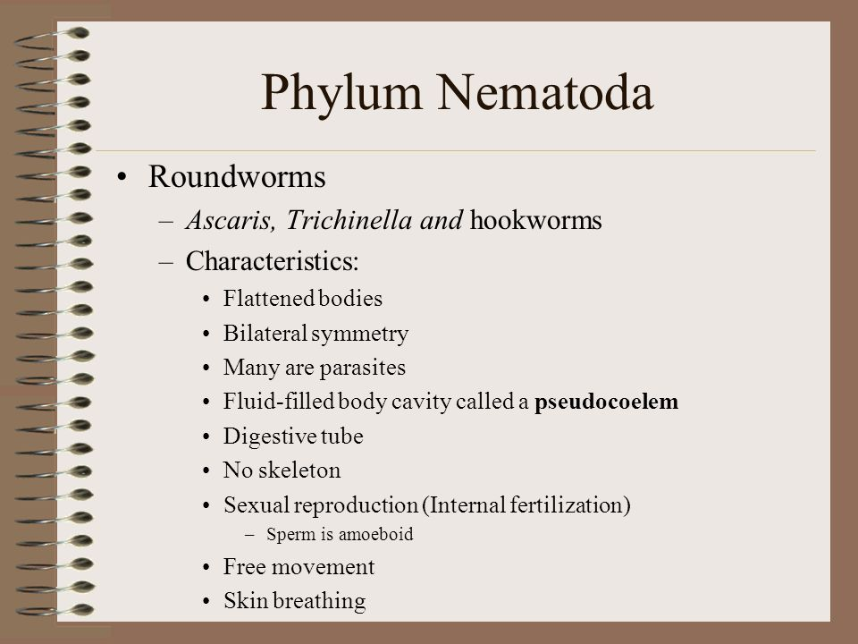 Phylum Nematoda Class Secernentea (Phasmidea)- Phasmids (sensory structures) in tail –Ascaris, Enterobius, Rhabditis, Turbutrix, Necator, and Wuchereria Class Adenophorea (Aphasmidia)- No phasmids –Dioctophyme, Trichinella, Trichuris 50 species are parasitic Plant parasites feed on living plant cells in all parts of plant, causing wilting and withering 14 species affect humans –Ex: Enterobius (p inworms), Ascaris lumbricoides, Trichinella spiralis, Necator (hookworms)