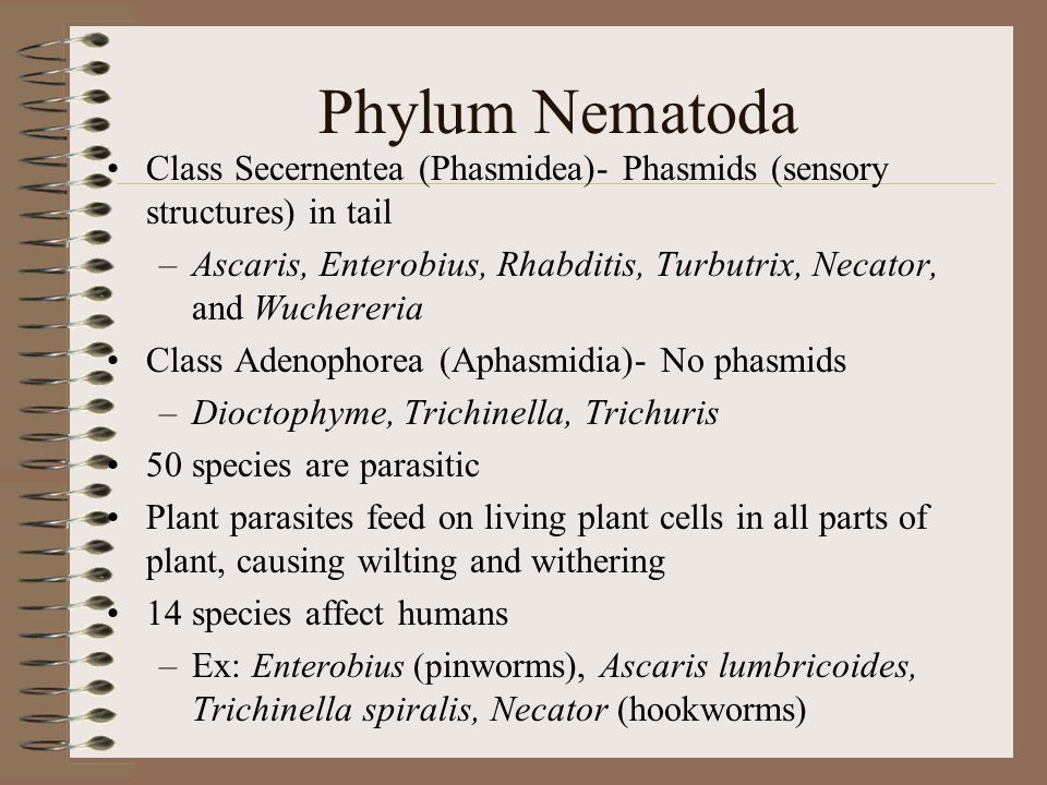 Phylum Nematoda trichinosisTrichinella infects pigs and causes trichinosis (serious disease caused by eating undercooked pork) Necator live in warm, moist soils of the tropics –Hookworm larvae enter bloodstream through soles of feet