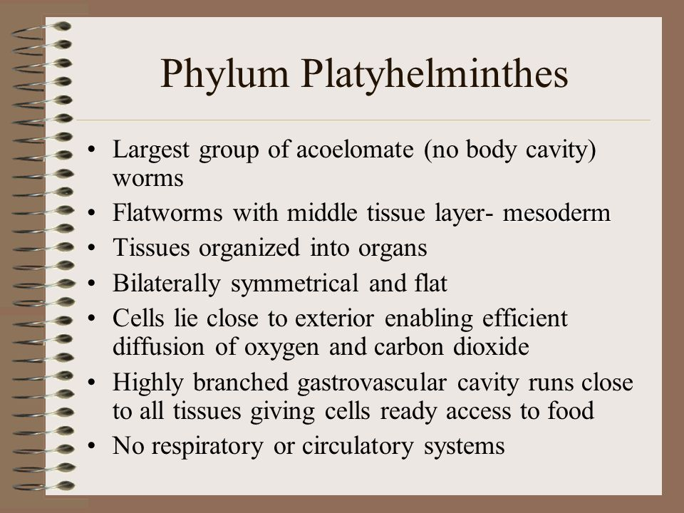 Phylum Platyhelmithes Flatworms –Liver Flukes, Planaria and tapeworms –Marine flatworms –Characteristics: Ribbon-like bodies Bilateral symmetry Branched digestive system No skeleton Asexual (fission); Hermaphrodites (sexual) Free movement Skin breathing