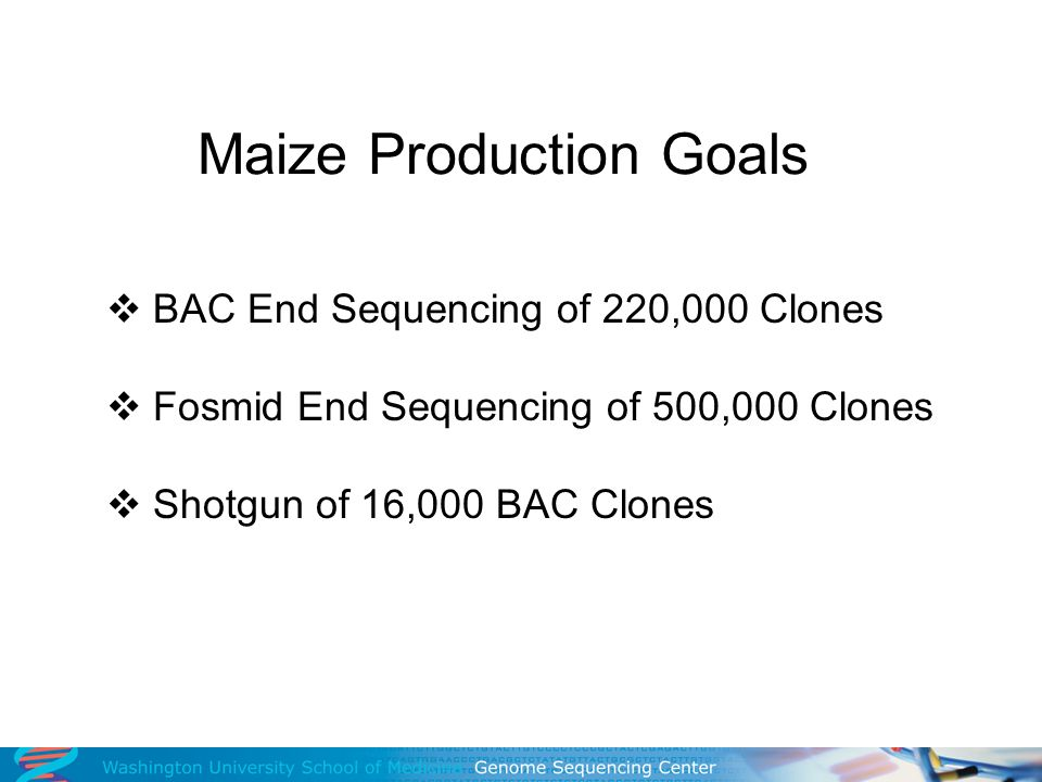 Maize BAC End Sequences 580,000 reads processed 567 average read length 60% success