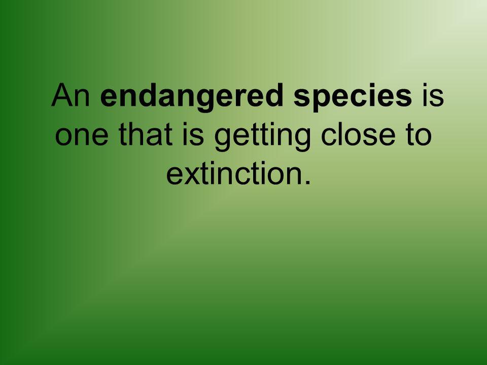 Endangered Species Top Ten List.
