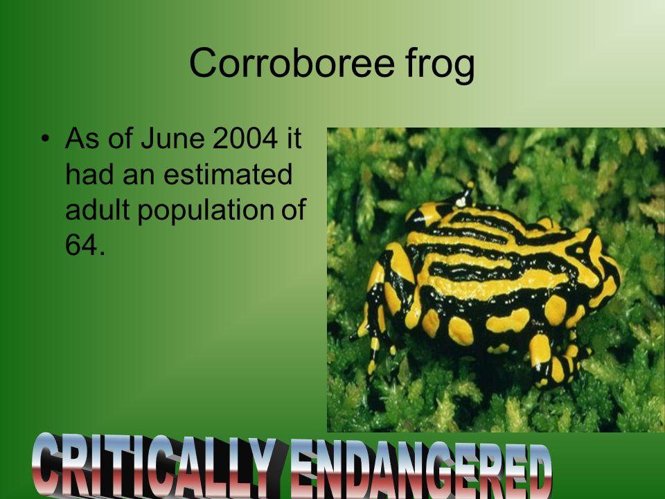 Crocodile newt It is also called tylototriton verrucosus.