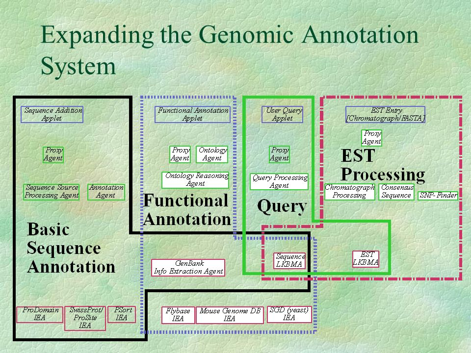 Functional Annotation Suborganization Gene Ontology Consortium www.geneontology.org Biological process Molecular Function Cellular Component