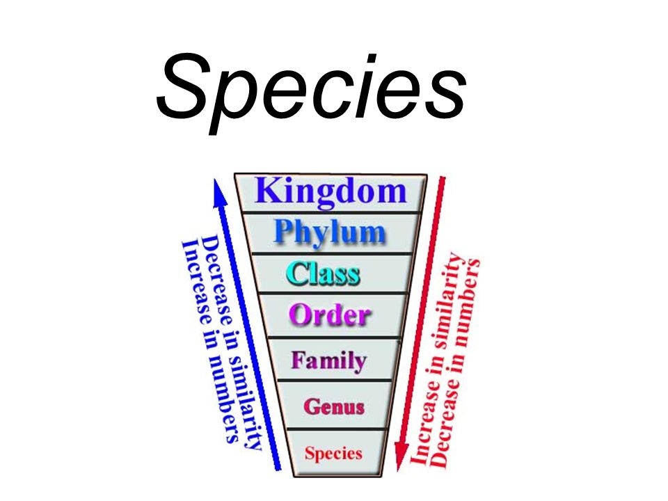 The smallest group into which an organism is classified.