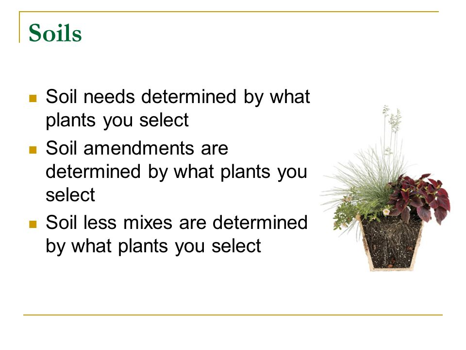 Plan Season Fall Winter Spring Summer Type of plants Annual Perennial Vegetable Flower