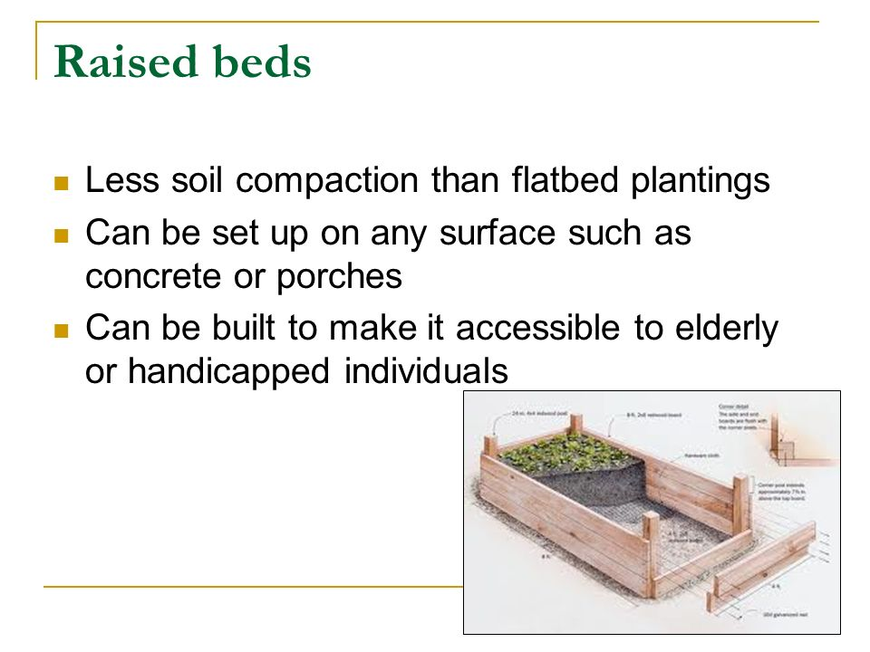 Flat Beds Flat bed is the most tradition way to plant vegetables is in rows Usually a two foot gap is left between each row for easy watering and harvesting One disadvantage of flatbed planting is it consumes a lot of space.