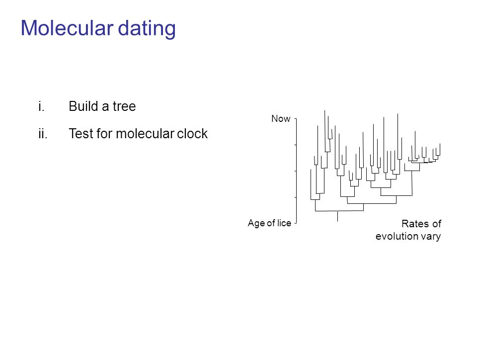 Molecular dating i.Build a tree ii.Test for molecular clock iii.Apply calibrations