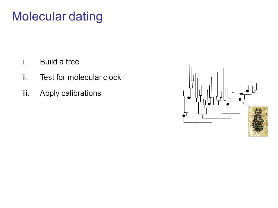 Molecular dating i.Build a tree ii.Test for molecular clock iii.Apply calibrations iv.Smooth rates across the tree -R8s with Penalized Likelihood (Sanderson, 2003) -Multidivtime (Thorne et al, 1998) Now Age of lice -BEAST (Drummond et al, 2006)