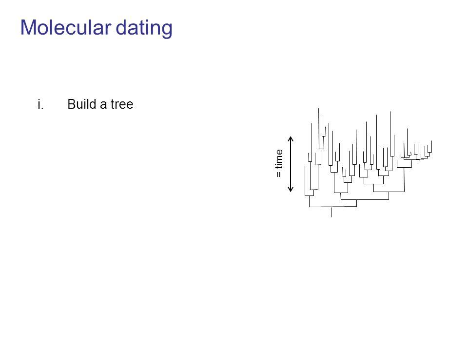 Molecular dating i.Build a tree ii.Test for molecular clock Now Age of lice