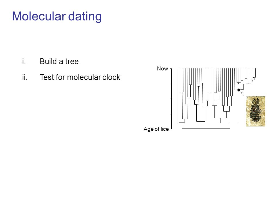 Molecular dating i.Build a tree ii.Test for molecular clock Rates of evolution vary Now Age of lice