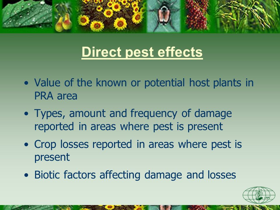 Direct pest effects Abiotic factors affecting damage and losses Rate of spread Rate of reproduction Control measures, their efficacy and cost Effect of existing production practices Environmental effects