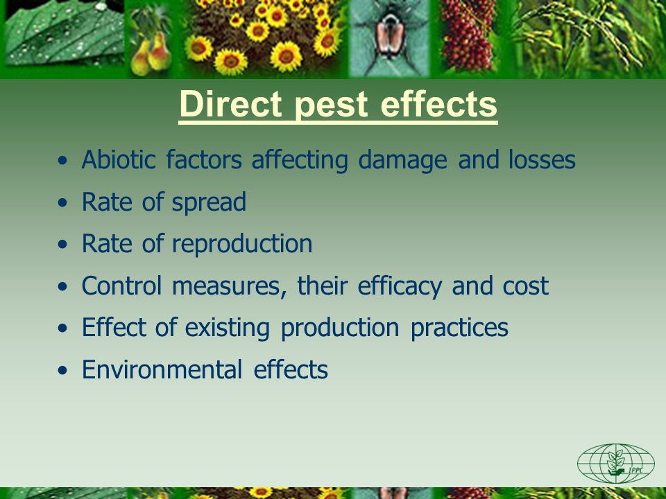 Indirect pest effects Effects on domestic and export markets, including effects on export market access Changes to producer costs or input demands Changes to domestic or foreign consumer demand for a product resulting from quality changes Environmental and other undesired effect of control measures