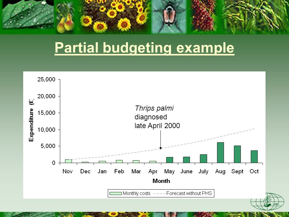 Partial budgeting example Thrips palmi diagnosed late April 2000