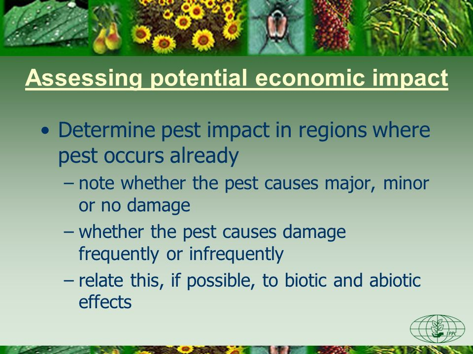 Assessing potential economic impact Use information from where pest occurs and compare with that in the PRA area Assess potential for economic importance –Qualitative, expert judgement –Quantitative, biological & economic techniques/ models