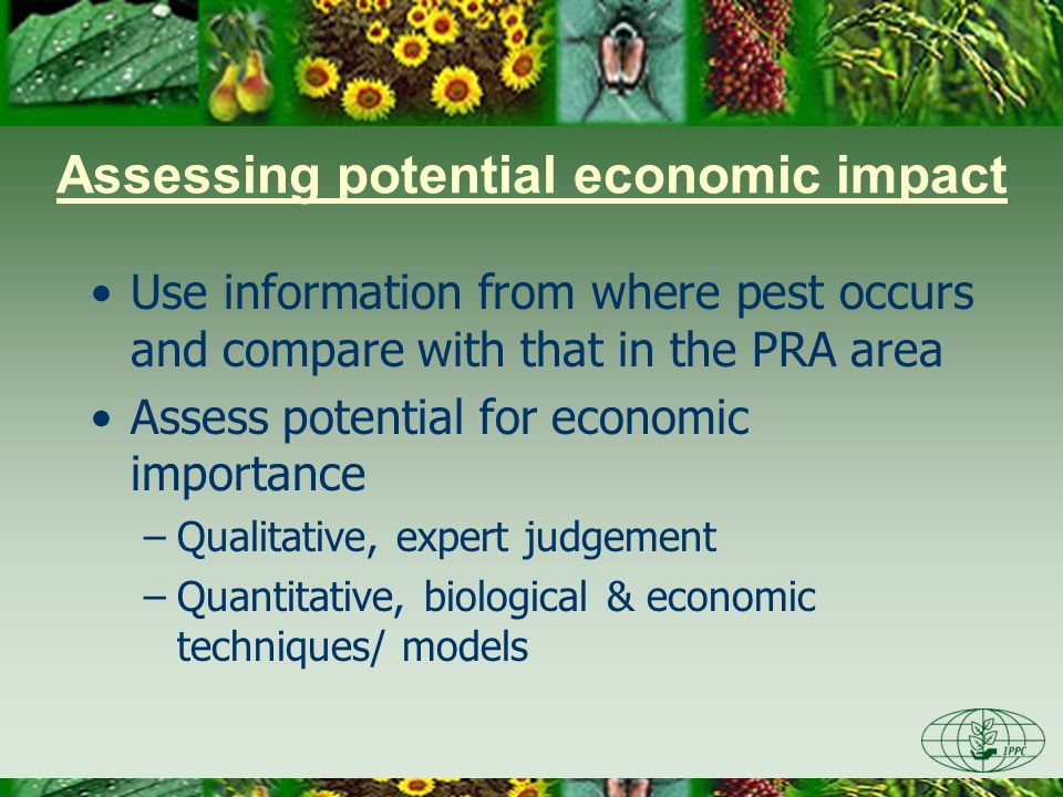 Assessing potential economic impact If a pest has no potential economic importance in the PRA area, then it does not satisfy the definition of a quarantine pest (or a RNQP) and the PRA for the pest stops