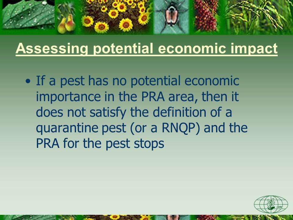 Identifying pest effects Direct effects –Longevity, viability of host plants –Yield, quality Indirect effects –Market effects, environmental effects and social effects