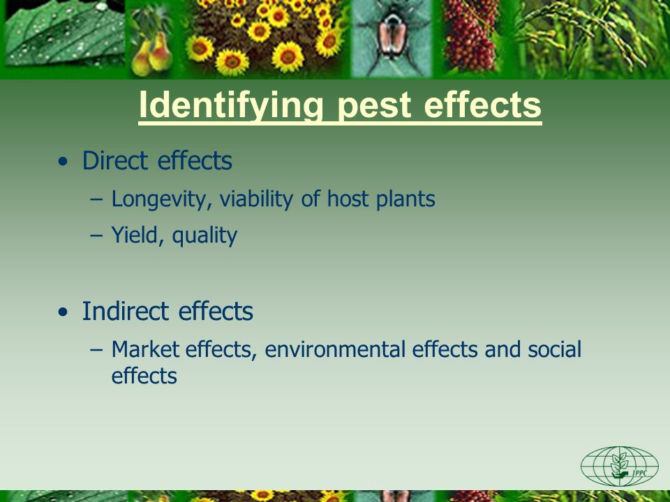 Direct pest effects Value of the known or potential host plants in PRA area Types, amount and frequency of damage reported in areas where pest is present Crop losses reported in areas where pest is present Biotic factors affecting damage and losses
