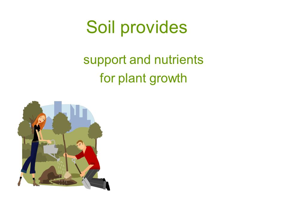 Soil provides support and nutrients for plant growth