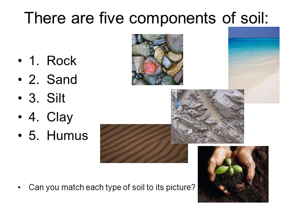 There are five components of soil: 1.Rock 2. Sand 3.