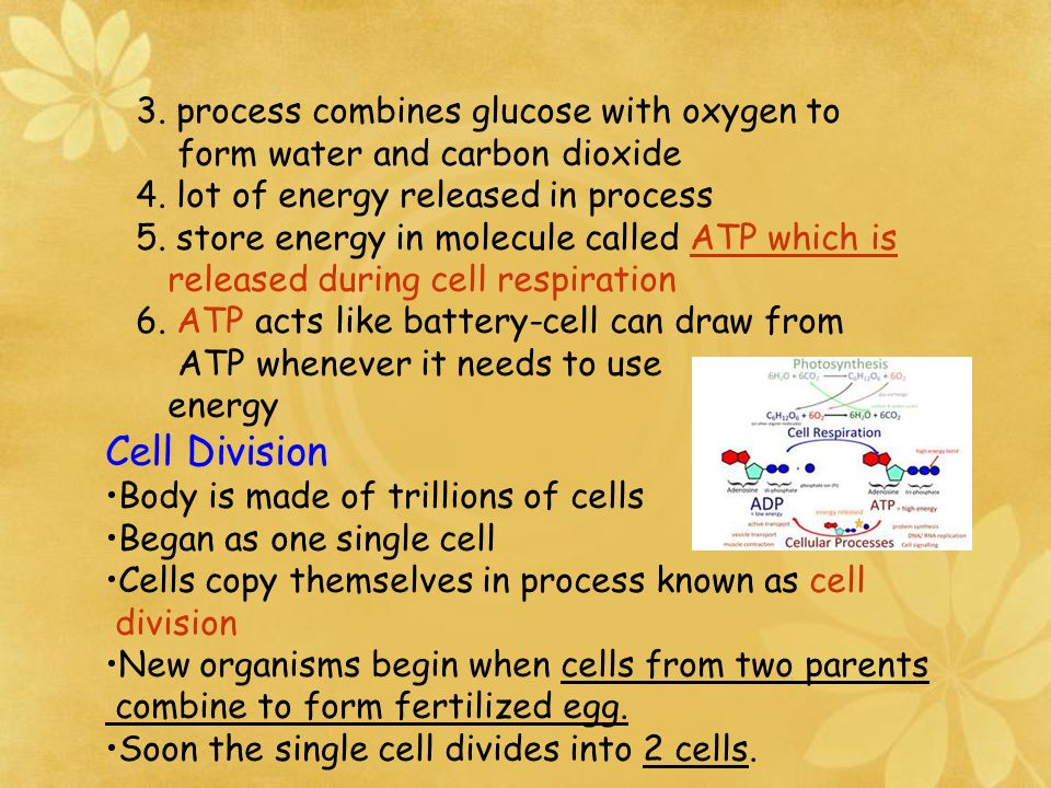 3.process combines glucose with oxygen to form water and carbon dioxide 4.