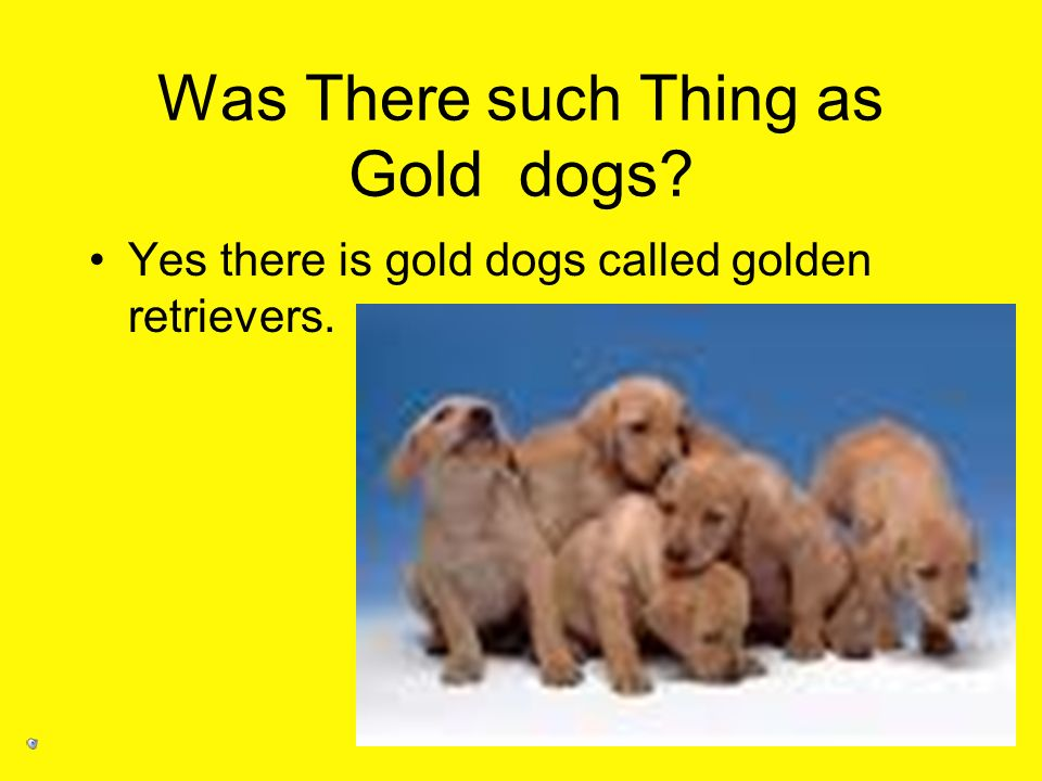 Was There such Thing as Gold dogs? Yes there is gold dogs called golden retrievers.