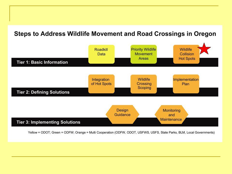 Types of Wildlife Collision Data Focused Road Kill Observations Possible to get accurate location and species info.