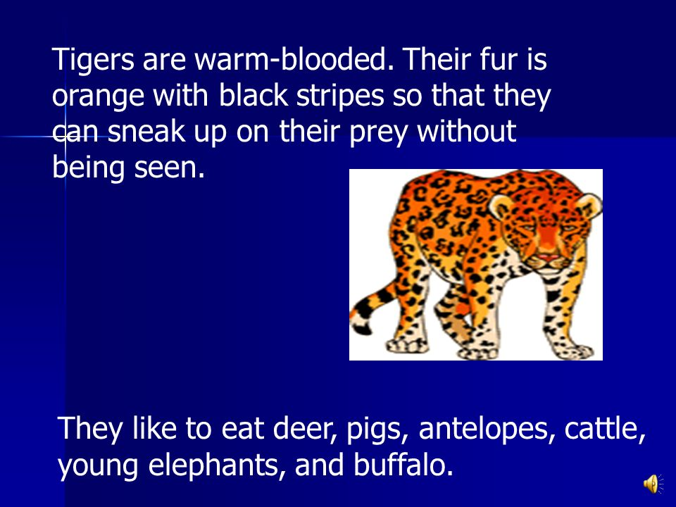 Tigers are warm-blooded.