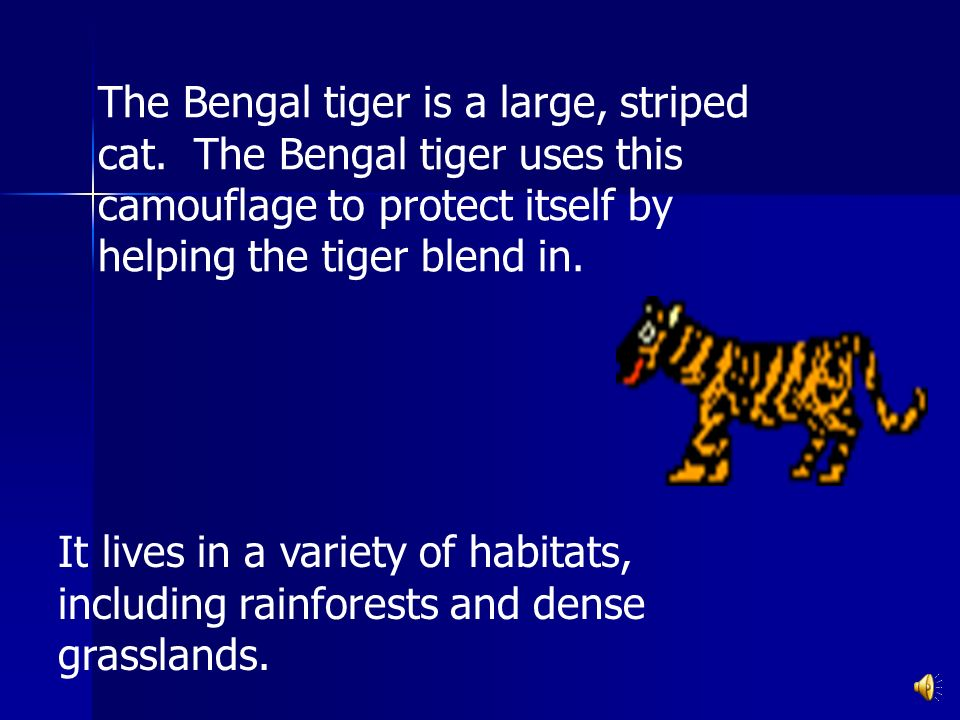 The Bengal tiger is a large, striped cat.
