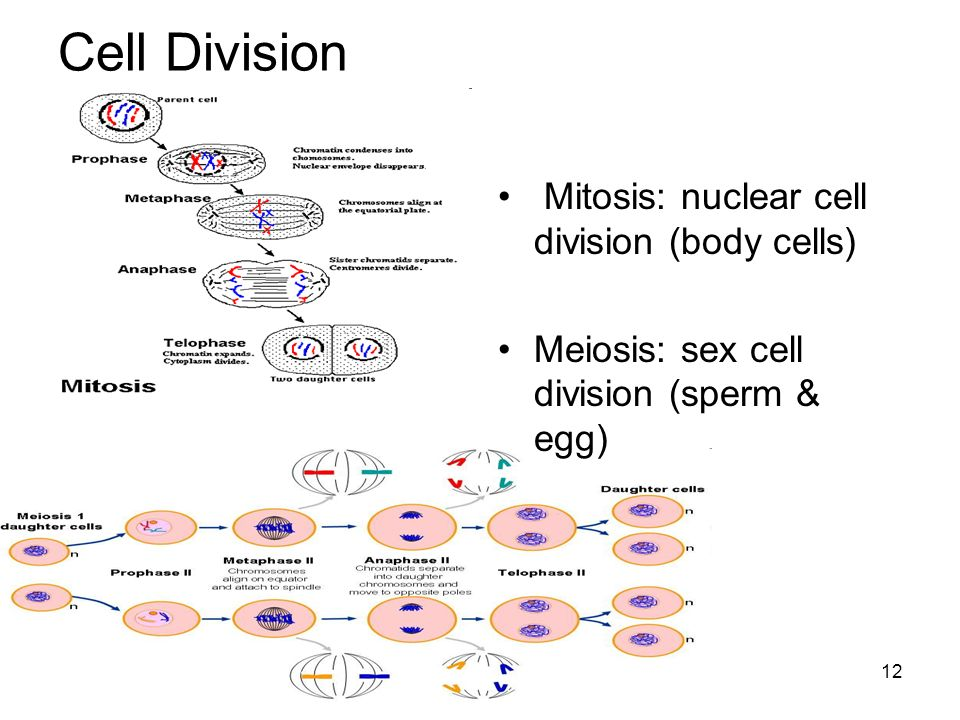 Transport Q: How do cells get materials in & out.Active –Energy required.