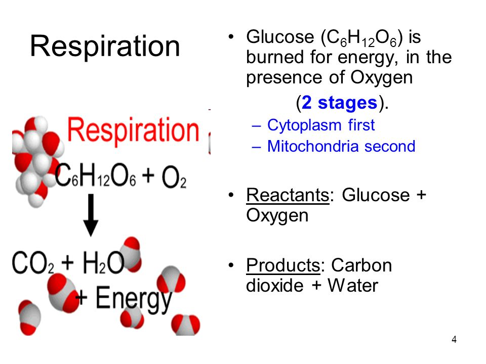Turn & Talk to complete this frame: Photosynthesis Respiration 5