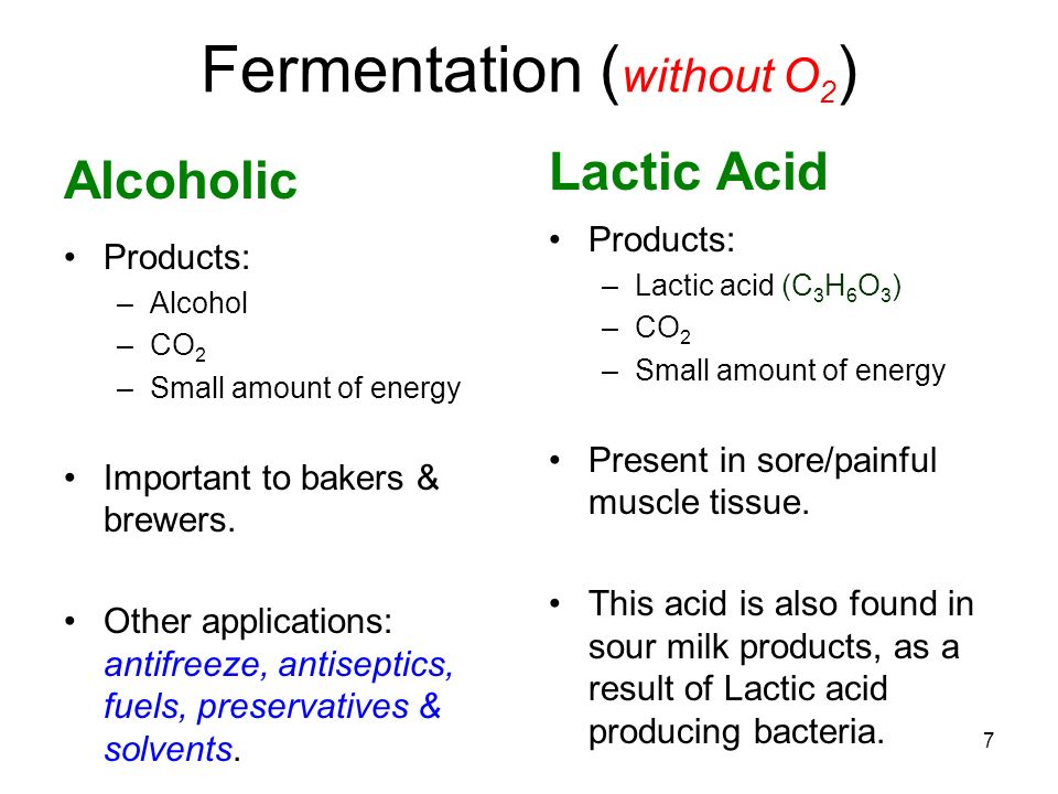 Turn & Talk to Complete: 8 Respiration Fermentation