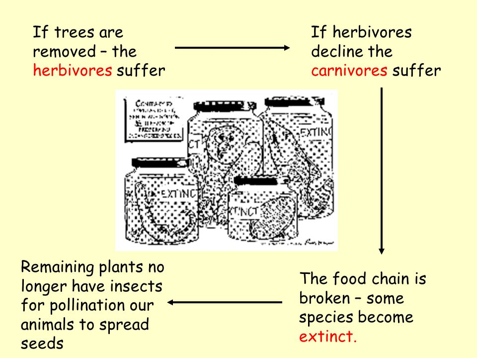 If trees are removed – the herbivores suffer If herbivores decline the carnivores suffer The food chain is broken – some species become extinct.
