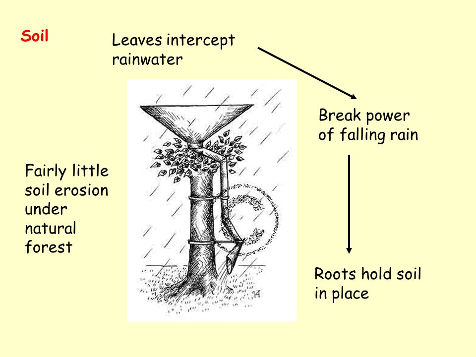 Soil Leaves intercept rainwater Break power of falling rain Roots hold soil in place Fairly little soil erosion under natural forest