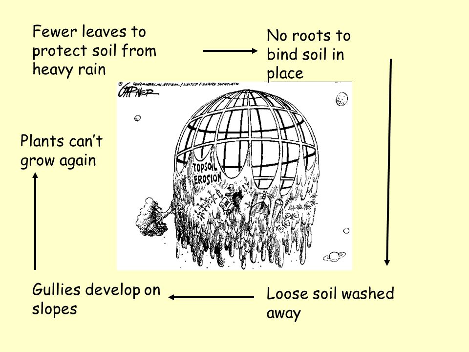 Fewer leaves to protect soil from heavy rain No roots to bind soil in place Loose soil washed away Gullies develop on slopes Plants cant grow again