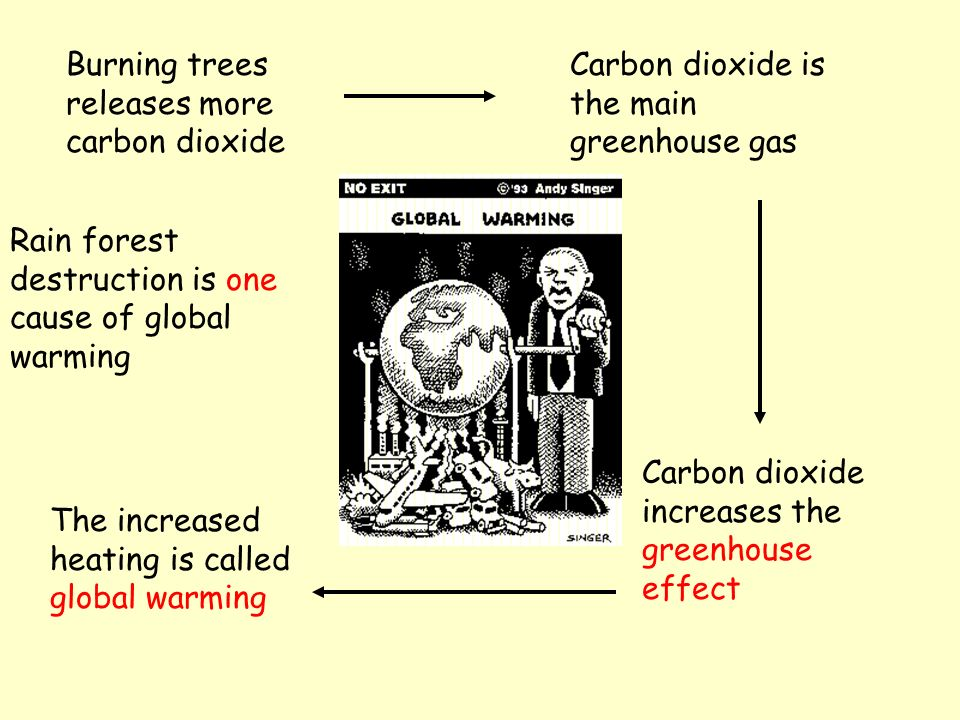 Burning trees releases more carbon dioxide Carbon dioxide is the main greenhouse gas Carbon dioxide increases the greenhouse effect The increased heating is called global warming Rain forest destruction is one cause of global warming