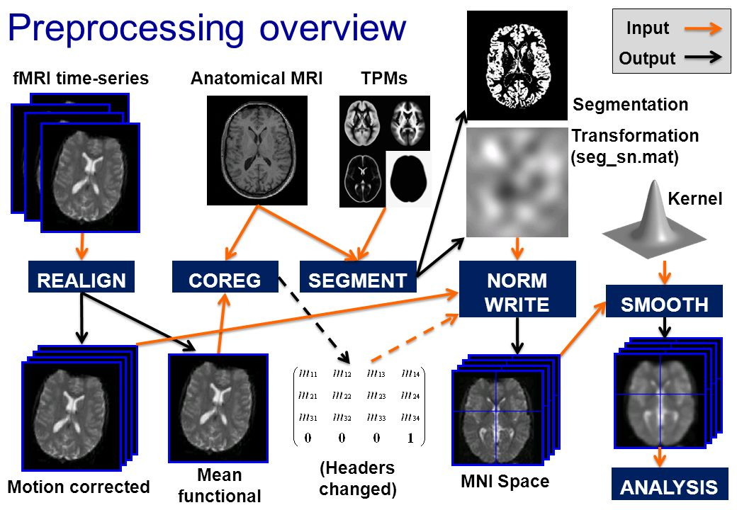 Preprocessing (fMRI only) fMRI time-series Motion corrected Mean functional REALIGNSEGMENT NORM WRITE SMOOTH ANALYSIS Input Output Segmentation Transformation (seg_sn.mat) Kernel MNI Space TPMs