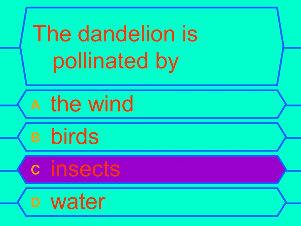 The dandelion is pollinated by A the wind B birds C insects D water