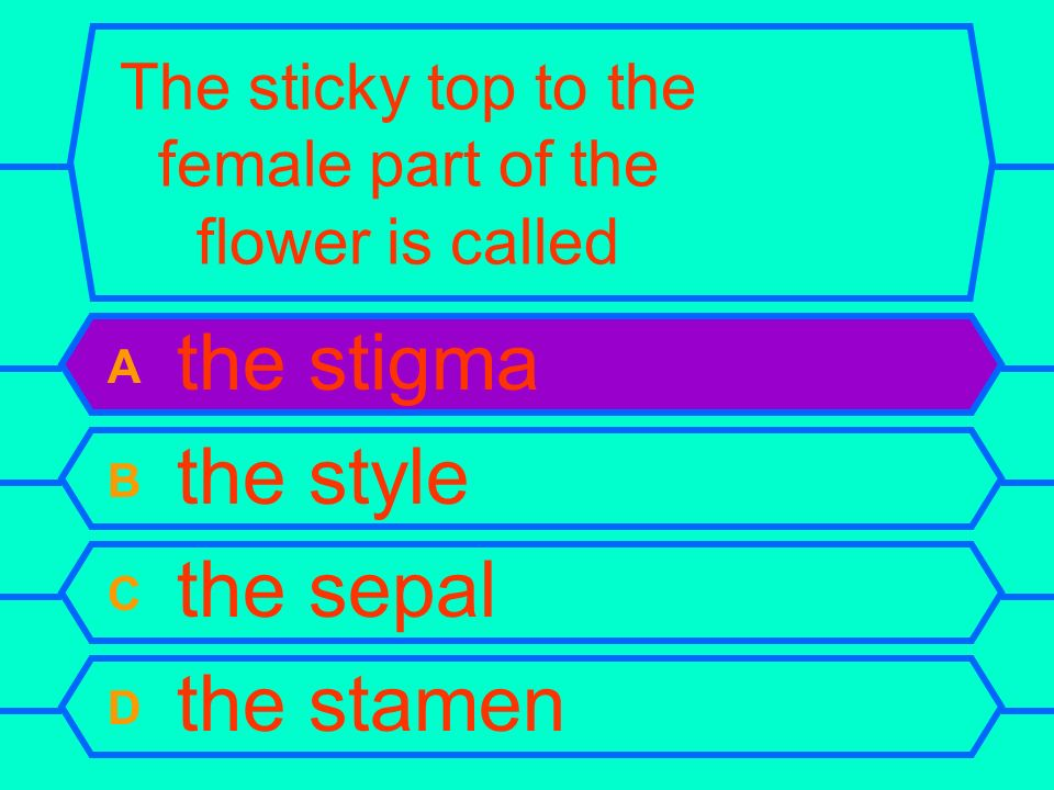 The sticky top to the female part of the flower is called A the stigma B the style C the sepal D the stamen
